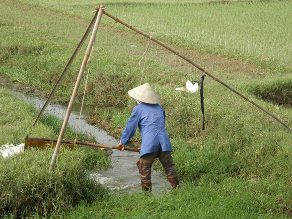 19-Rice-Farming