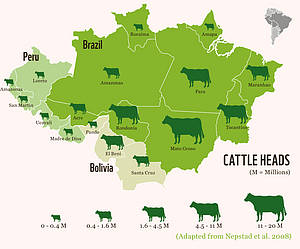 Distribution of Cattle in Brazil